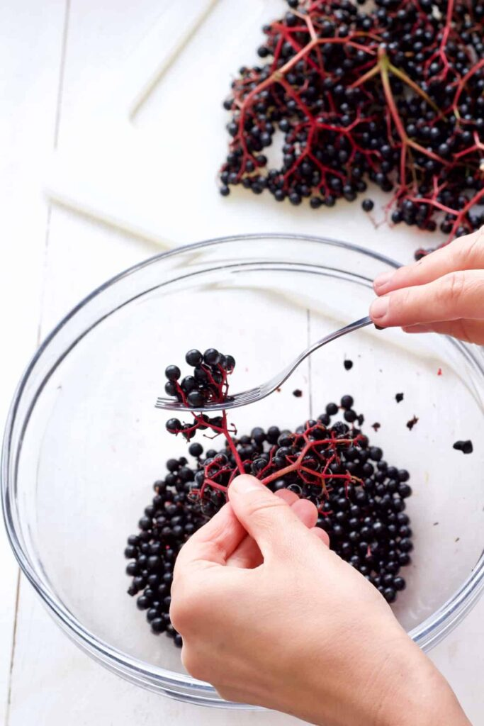 Picking elderberries off the stalks with a fork.